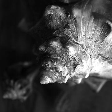 Shells by jennabee25