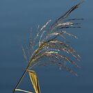 Water Grass by kernuak
