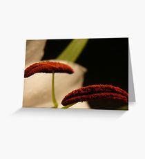 In bloom with macro Greeting Card