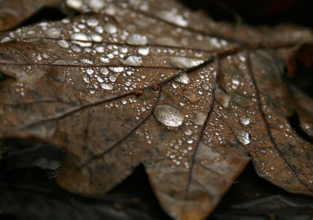 Autumn leaf by Anna Leworthy
