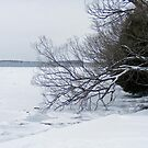 Tree over Frozen Lake by Ben Kelly