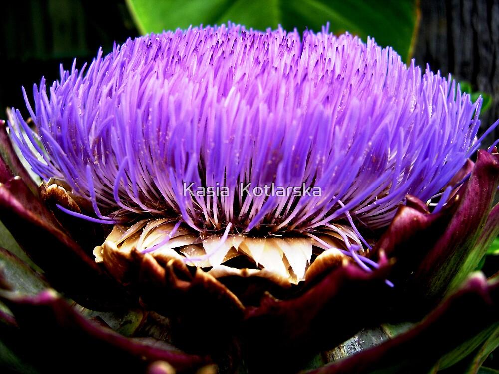 Purple flower by Kasia  Kotlarska