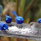 Bluey,s restaurant. by adbetron
