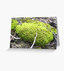 Moss of Tammin 2 Greeting Card