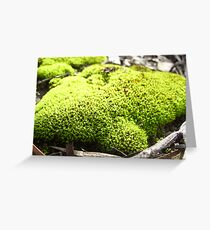 Moss of Tammin 3 Greeting Card
