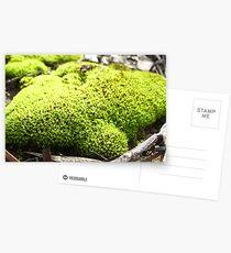 Moss of Tammin 3 Postcards