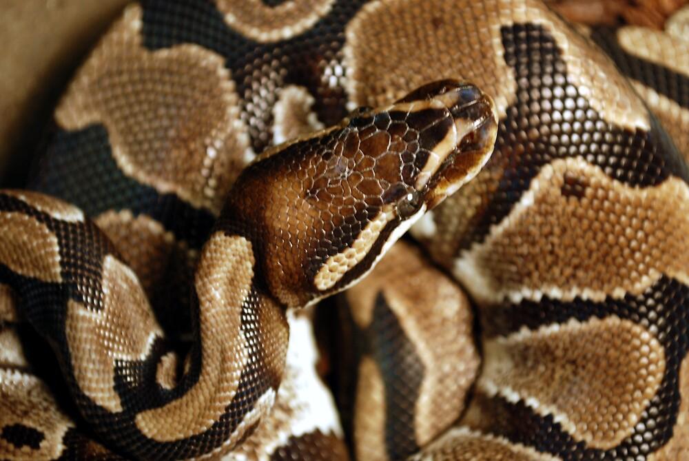 -snake by Justin Michaelov
