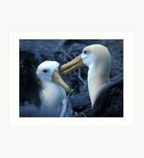 Albatros Pair on Galapagos Art Print