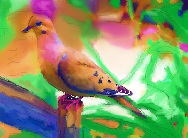 Mourning Dove by Nazareth
