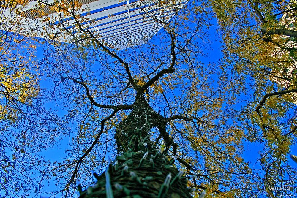 City Up tree by terrebo