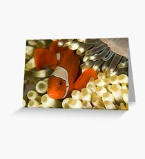 Clown Fish in Anemone Greeting Card