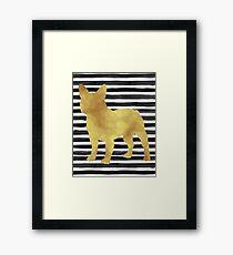 French bulldog stripes and gold Framed Print