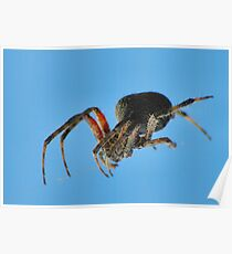 Spider on a wire Poster