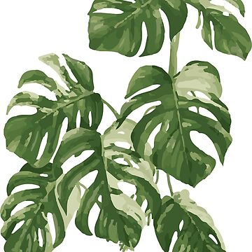 Monstera Leaf | Tropical Plant by koovox