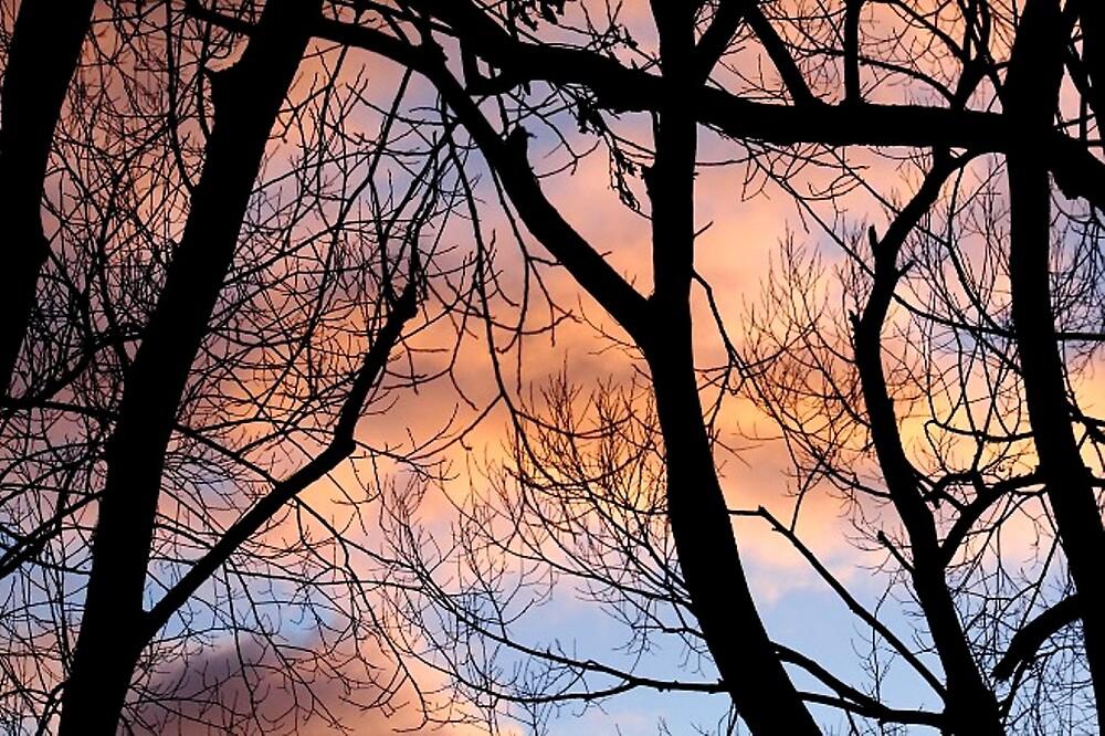 Morning trees by Kala Lampard