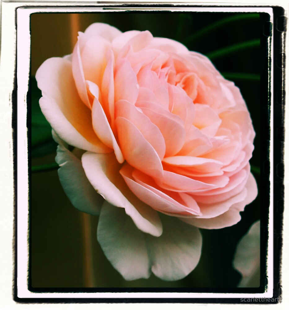 waiting in pink by scarlettheartt