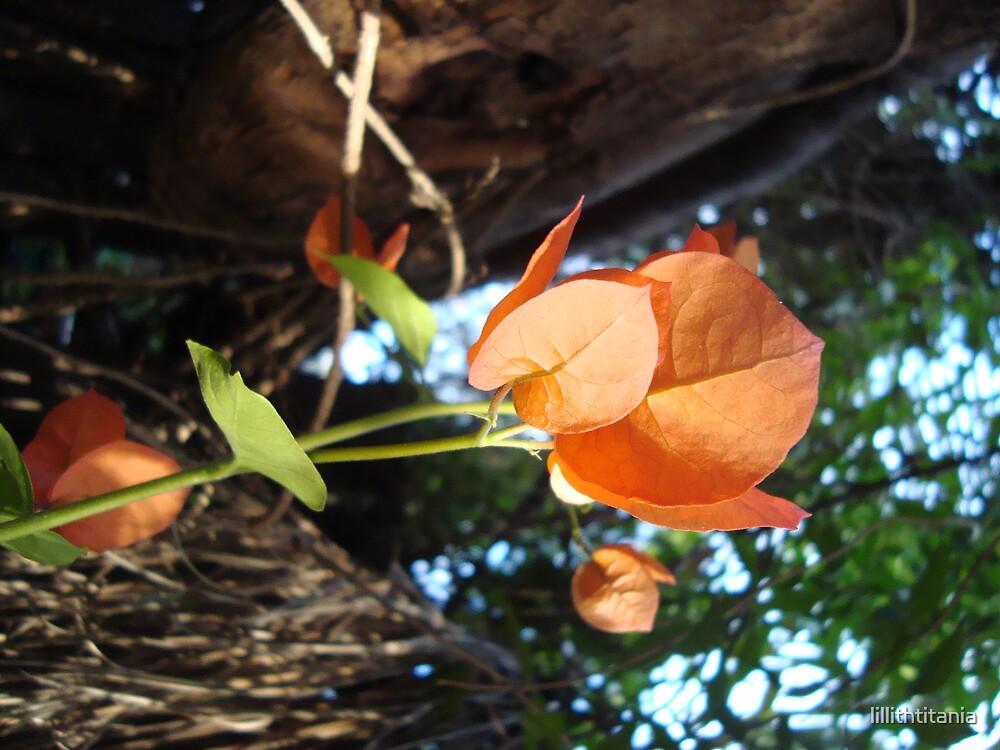 Orange Delight by lillithtitania