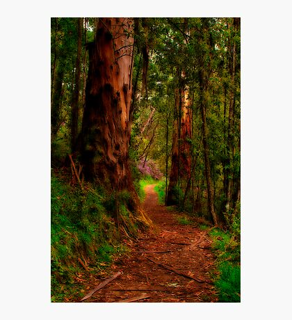 """The Pathway"" Photographic Print"