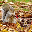 squirrel with shopping cart by Simon-dell