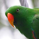 Eclectus Envy by sarah ward