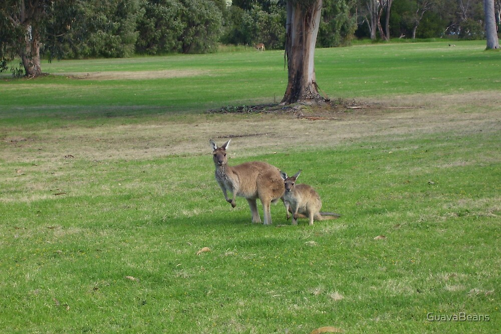 Roos on the Green by GuavaBeans