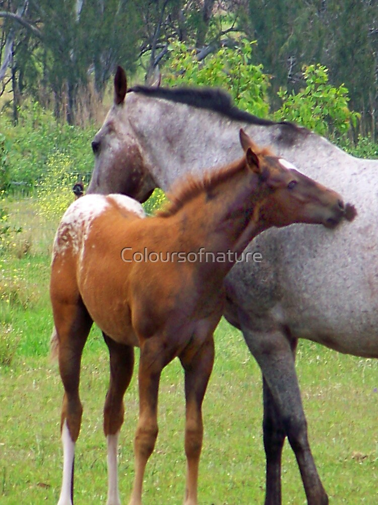 sweetest love by Coloursofnature