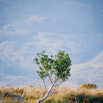young tree by kolografie