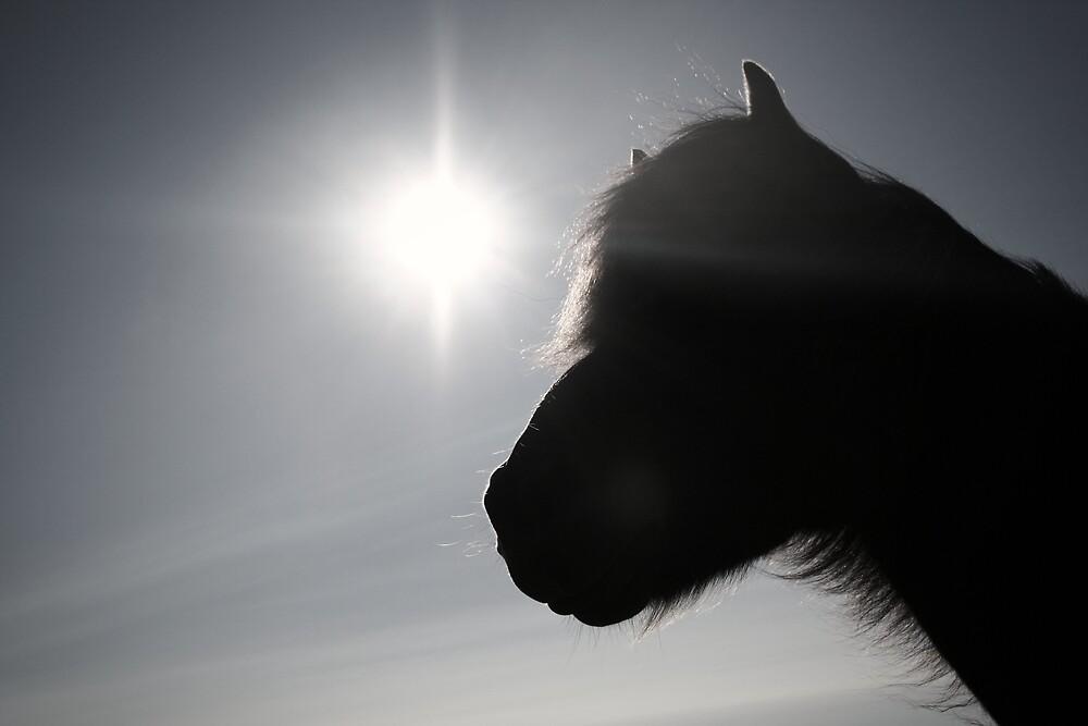 The icelandic horse by sunnaix