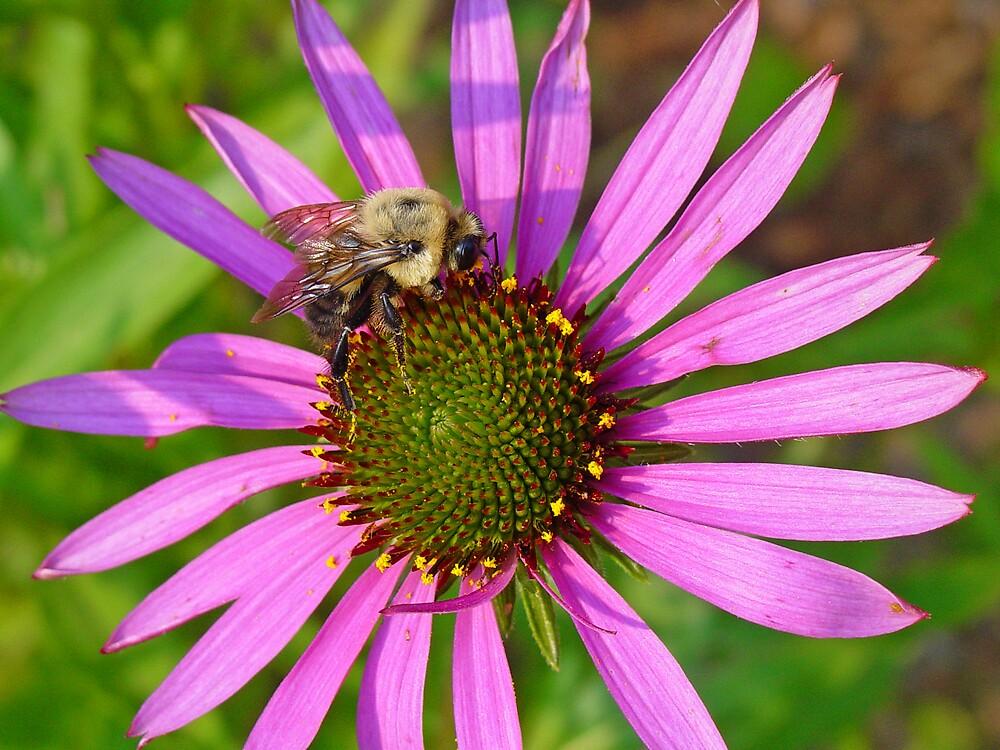 Searching for Nectar by Karen Kaleta