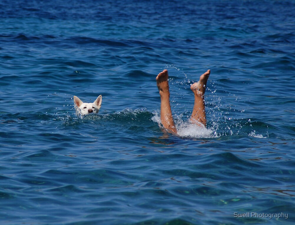 Sea Dog by Swell Photography