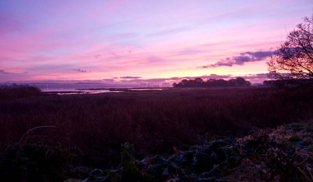Purple Sunrise by sheapy