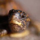 Turtle by Clayton Bruster