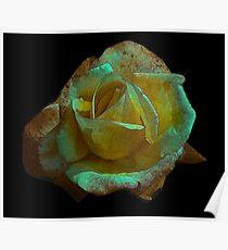 Rose -#2 Poster