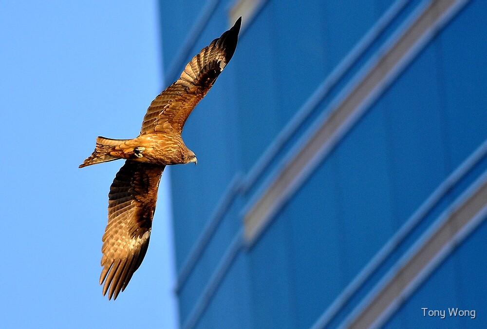 Eagle vs Building by Tony Wong