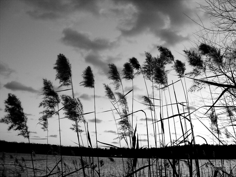 WINTER REEDS by Camerin