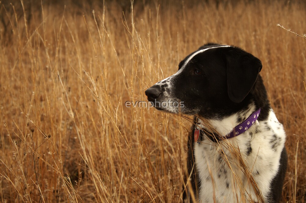 Hound in Nature by evmphotos