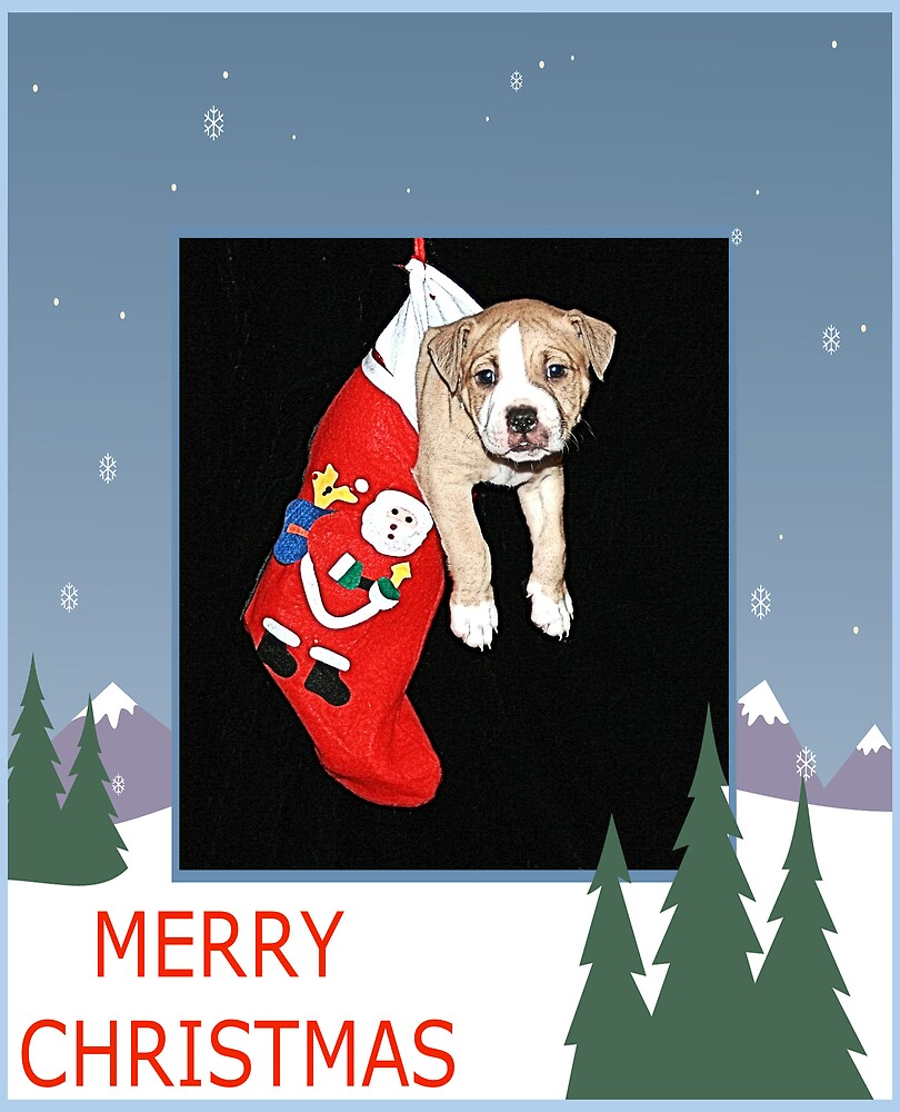 CHRISTMAS CARD PUPPY#1 by BOLLA67