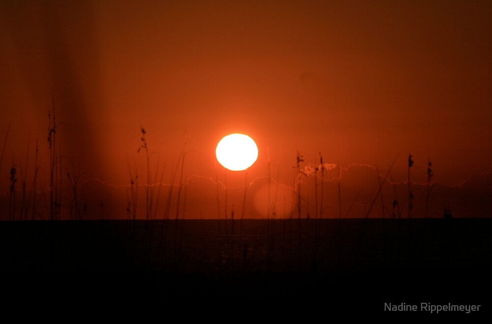 Red Sunset and Grasses by Nadine Rippelmeyer