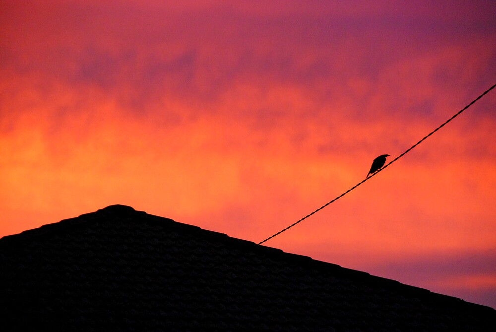 Bird on a wire by Alyssa Barwick