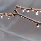 Frozen Raindrops by Owed To Nature