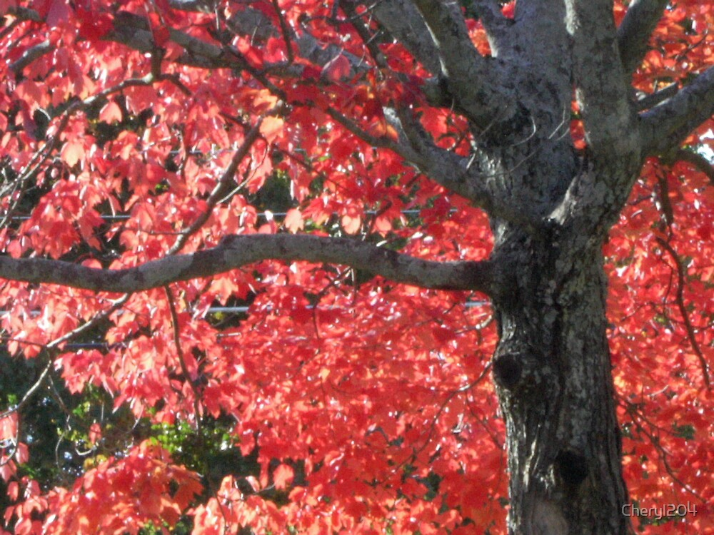 Autumn in Tennessee by Cheryl204
