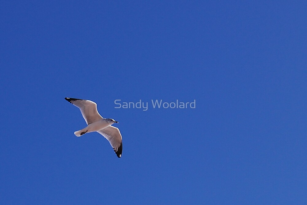 Free by Sandy Woolard