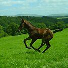 Foals first gallop by amandafriend