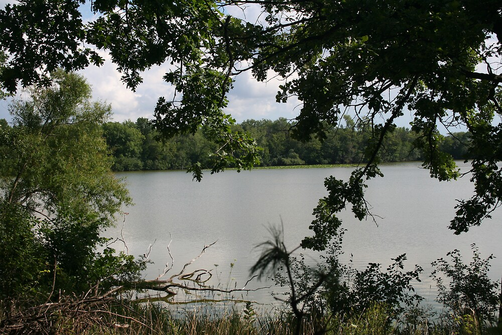 The lake through the tree by Ilan Cohen