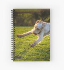 Orange and White Italian Spinone Dog in Action Spiral Notebook