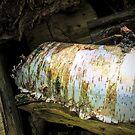 Silver Birch log by Simon Duckworth