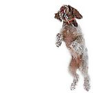 Brown Roan Italian Spinone Dogs in Action I by heidiannemorris
