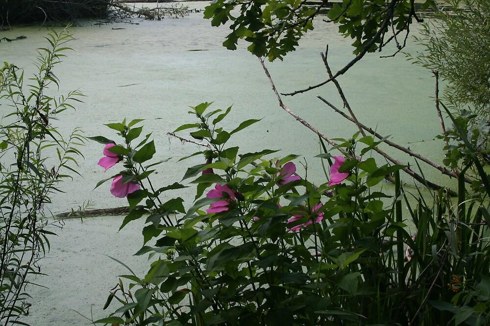Flowers near the lake by Ilan Cohen