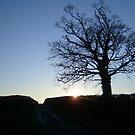 Winter Tree by amandafriend