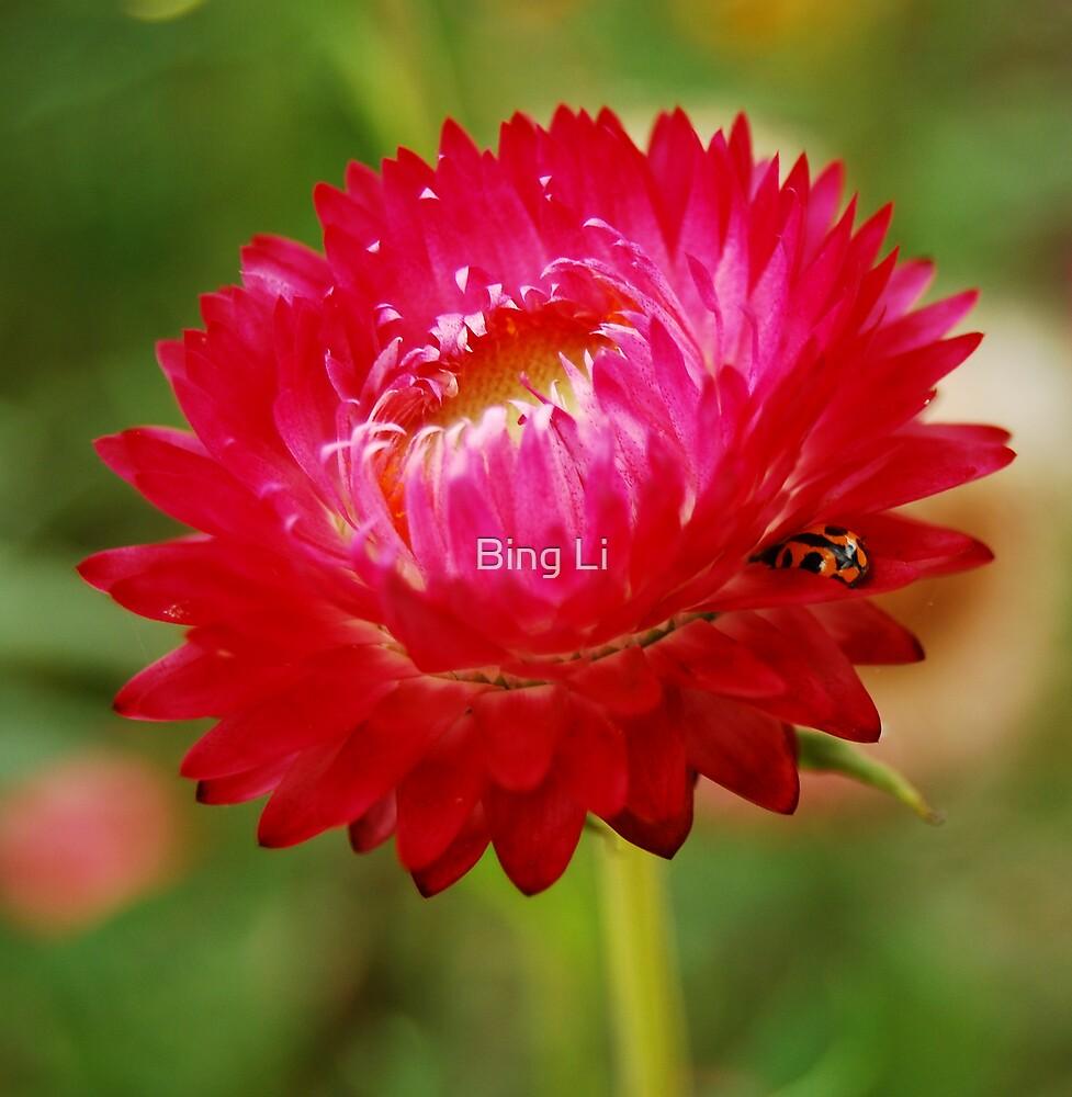 Resting - ladybug by Bing Li